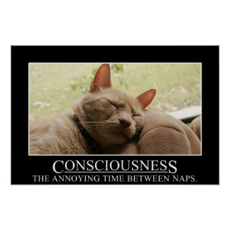 Consciousness: the annoying time between naps (S) Poster