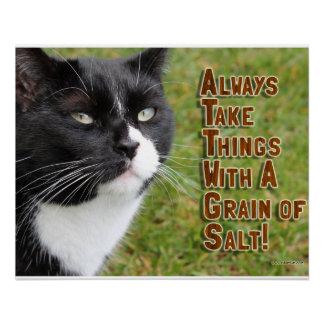 Consejo salado del gato perfect poster