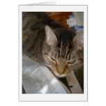 Conserva en vinagre el gato tarjeton
