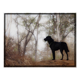 "Conservation Canine ""Scooby"" Picture/Print"