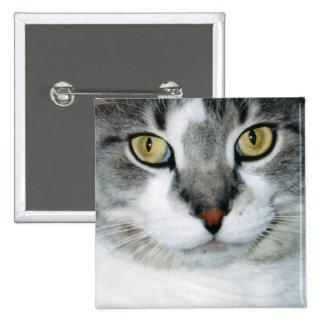 Conserve en vinagre el botón del gato pin