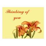 Consider The Lilies Of The Field Post Cards