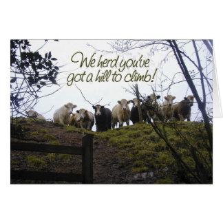 Consiga bien pronto. Vacas Tarjeta De Felicitación