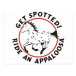 Consiga el Appaloosa manchado del leopardo Tarjetas Postales