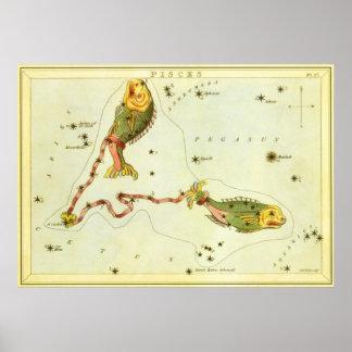 Constelación de los pescados de Piscis de la Póster