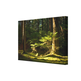 Constitutional Light - canvas from Orcas Island Gallery Wrapped Canvas