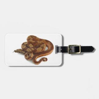 Constrictor de boa arrollado, chasqueando la etiquetas bolsas