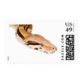 Constrictor de boa sellos postales