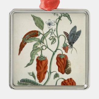 """Consuelda, """"de un herbario curioso"""", 1782 (inglés  ornamento para reyes magos"""