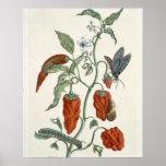 """Consuelda, """"de un herbario curioso"""", 1782 (inglés  poster"""