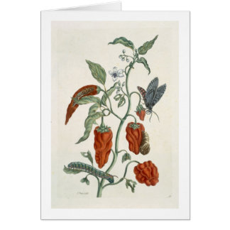 """Consuelda, """"de un herbario curioso"""", 1782 (inglés  tarjeta de felicitación"""