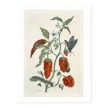 """Consuelda, """"de un herbario curioso"""", 1782 (inglés  postal"""
