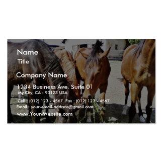 Consumición de caballos plantillas de tarjetas de visita