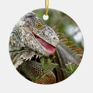 Consumición de la iguana adorno para reyes