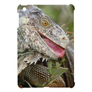 Consumición de la iguana