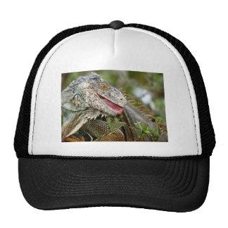 Consumición de la iguana gorras