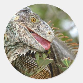 Consumición de la iguana pegatinas redondas