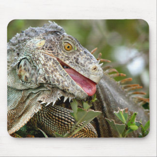 Consumición de la iguana tapetes de raton