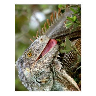 Consumición de la iguana tarjeta postal