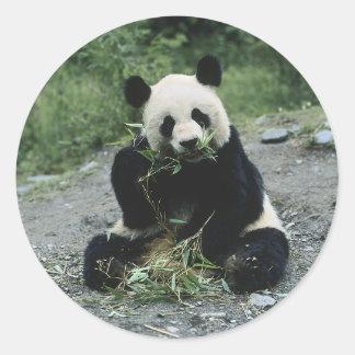 Consumición de la panda etiquetas redondas