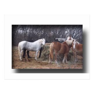 Consumición de los caballos de proyecto postal