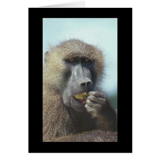 Consumición del babuino tarjeta de felicitación