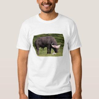 Consumición del búfalo del cabo playeras