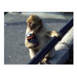 Consumición del mono postal
