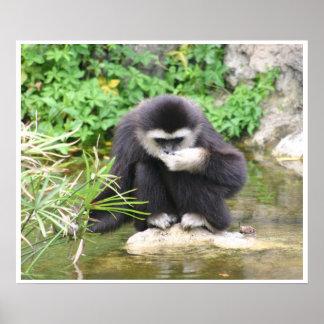 Consumición del mono póster
