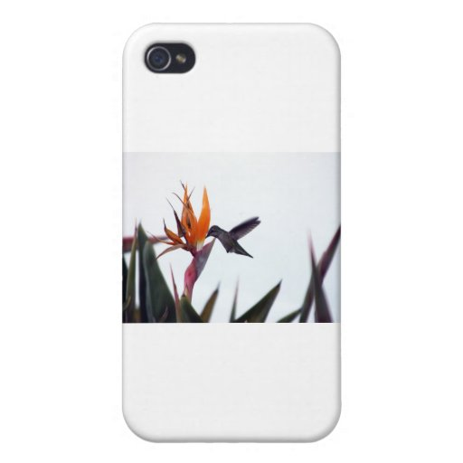 consumición del pájaro del tarareo iPhone 4 coberturas