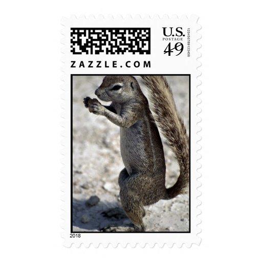 Consumición del roedor sellos