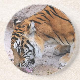 Consumición del tigre del primer posavaso para bebida
