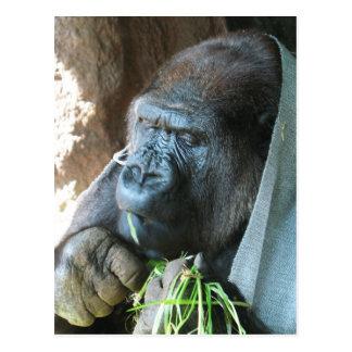 Consumición japonesa del gorila del ~ de la tarjetas postales