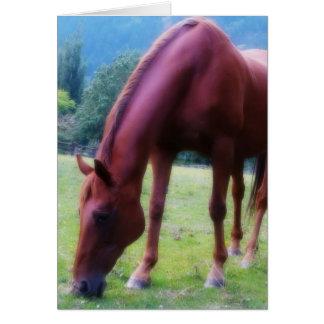 Consumición ocupada. Foto del caballo Tarjeta De Felicitación