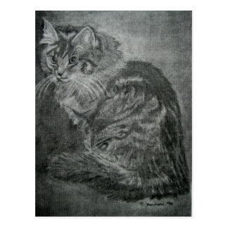 Contemplating Cat Postcard