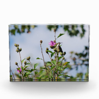 Contemplation decorative acrylic photo block