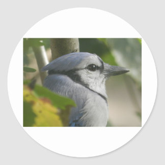 contemplative bird classic round sticker