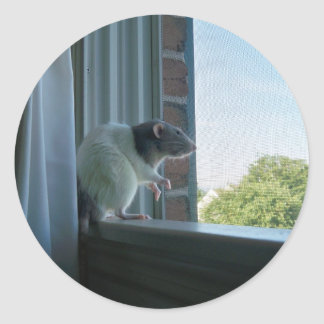 Contemplative Rat Classic Round Sticker