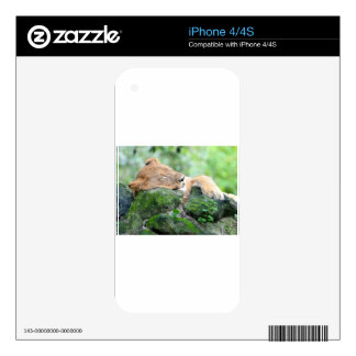 Contended Sleeping Lion iPhone 4 Decal