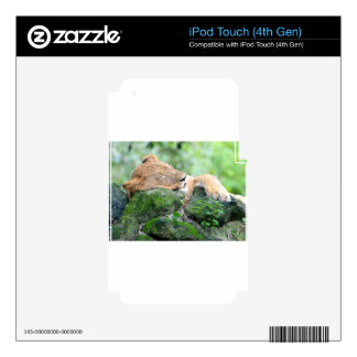 Contended Sleeping Lion iPod Touch 4G Skins