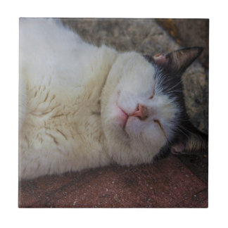 Content Cat Sleeping on Her Back Small Square Tile