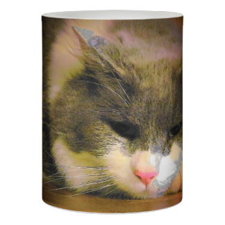 Content resting kitty flameless candle