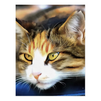 Contented Cat Postcard