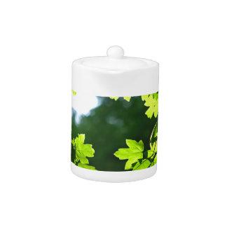Contraluz verde de las hojas de arce