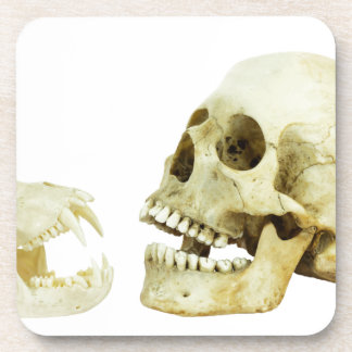 Contrario del cráneo del ser humano y del mono de posavaso