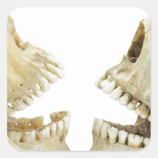 Contrario humano de dos cráneos de uno a pegatina cuadrada