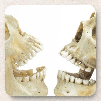 Contrario humano de dos cráneos de uno a posavaso