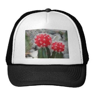 Contrast cactus trucker hat