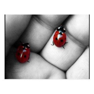contrast ladybird postcard