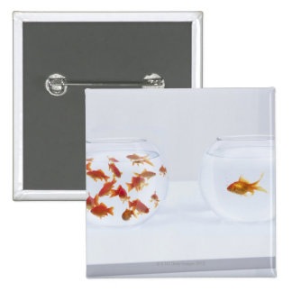 Contrast of  many goldfish in fishbowl and button